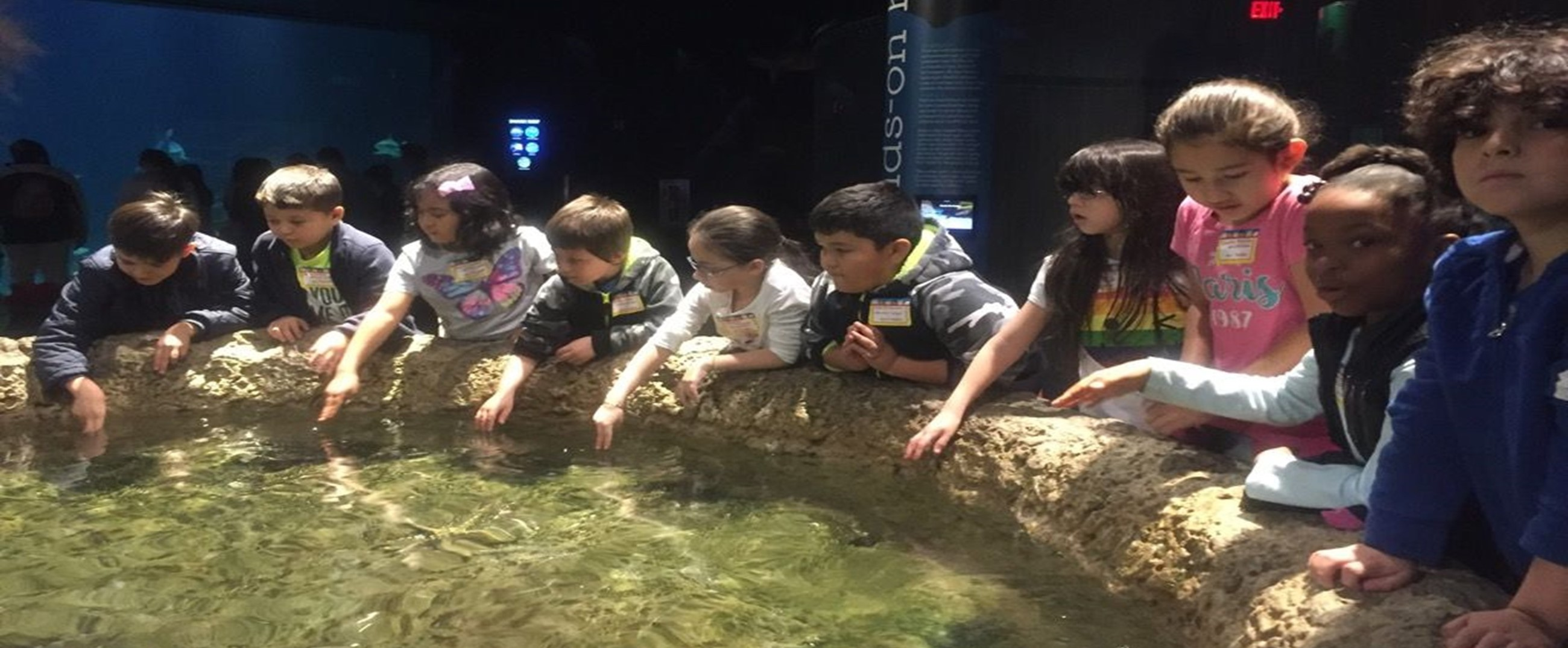 Touch tank at GSO Science Center 2nd graders