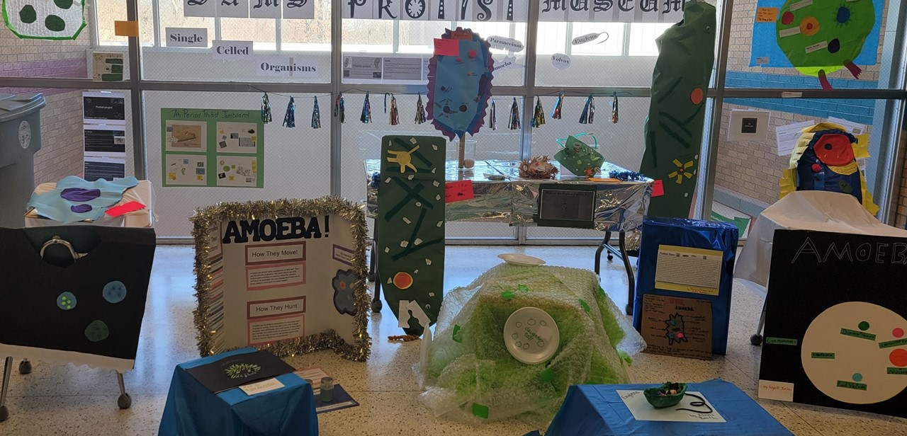 Museum of protist projects made by 7th grade students